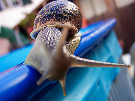 A snail on a blue railing on the edge of a surface pool