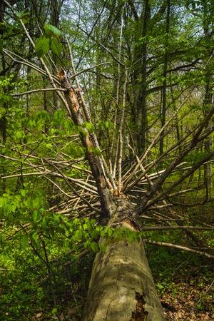 Wanderung in Ostelsheim, im schwarzen Wald an einem bewölkten Tag im Frühjahr Standard-Bild - 83988918