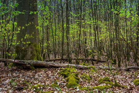 Wanderung in Ostelsheim, im schwarzen Wald an einem bewölkten Tag im Frühjahr Standard-Bild - 84333946
