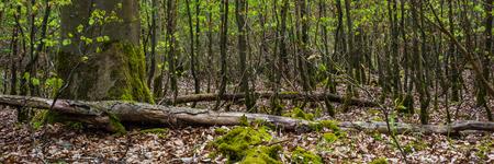 Wanderung in Ostelsheim, im schwarzen Wald an einem bewölkten Tag im Frühjahr Standard-Bild - 84246154