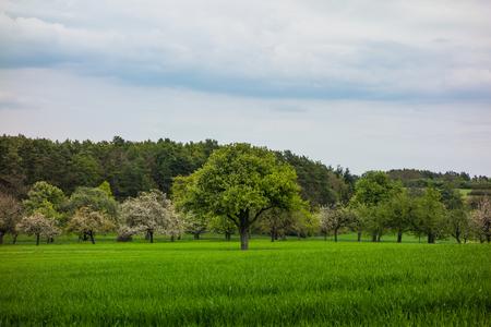 Wanderung in Ostelsheim, im schwarzen Wald an einem bewölkten Tag im Frühjahr Standard-Bild - 83988064