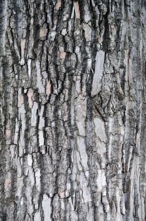 Wonderfully textured tree bark from a tree by the river in Clarksville TN. Stock Photo