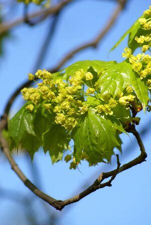 leaves spring on blue sky