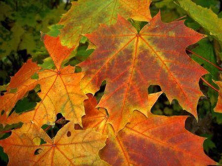 color leaves autumn seasons nature Stock Photo