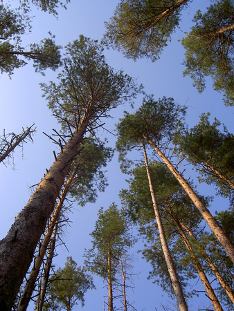 trees up to the sky