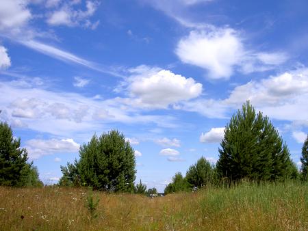 trees grass sky summer