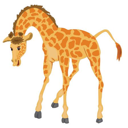 vector illustration of a cartoon Giraffe  isolated over white