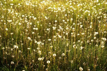 field of the  flowers sun grass Stock Photo - 1876158