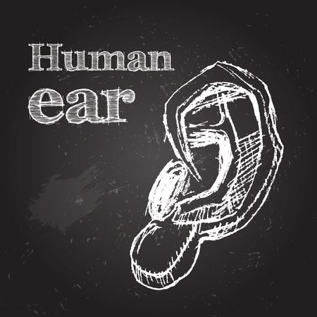 the human ear: Sketch vector illustration. Human ear. Hand-drawn on chalkboard Illustration