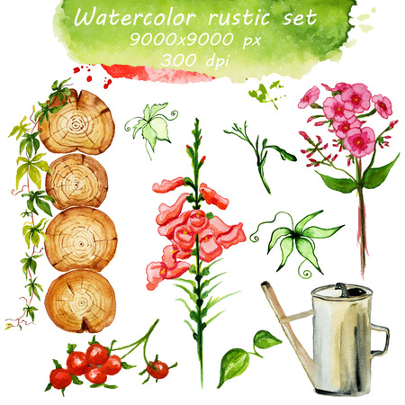 climbing plant: Colorful floral watercolor collection in rustic style. Hand-drawn illustration of flowers, cross section of the trunk, climbing plant, berries, leaves and  watering can. Eco set, summertime