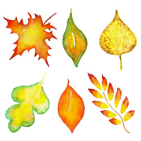 Set with floral autumns leaves. Watercolor hand drawn illustration