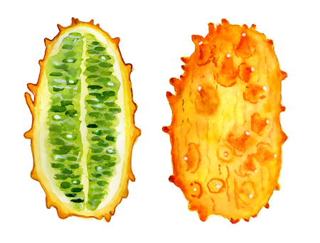 kiwano slice watercolor hand drawn illustration, tropical exotic fruit isolated on the white background