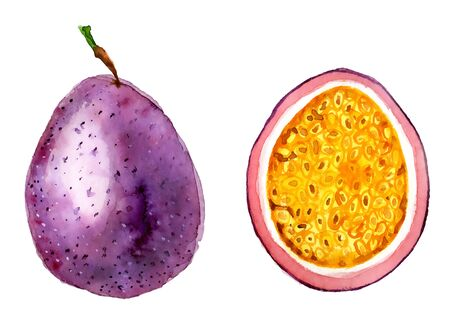 Passion fruit slice watercolor hand drawn illustration, tropical exotic,  isolated on the white background