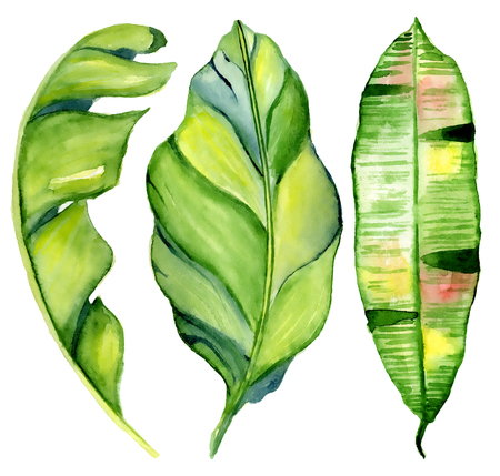 Watercolor tropical leaves Hand drawn plants set Exotic palm leaf, jungle tree Perfect for fabric design,  invitations, greeting cards and wallpapers Aloha collection