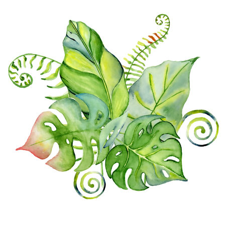 Watercolor tropical leaves bouquet Hand drawn plants set Exotic palm leafe, jungle tree Perfect for fabric design,  invitations, greeting cards and wallpapers Aloha collection
