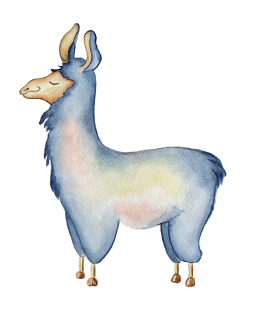 Cute Llama cartoon character watercolor illustration, Alpaca animal, hand drawn style.  Isolated white background. Good for greeting cards, invitations, decoration, etc. Stock Photo