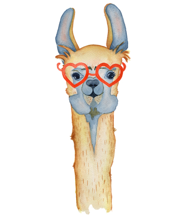 Cute Llama cartoon character with red glasses watercolor illustration, Alpaca animal, hand drawn style.  Isolated white background. Good for greeting cards, invitations, decoration, etc. Stock Photo