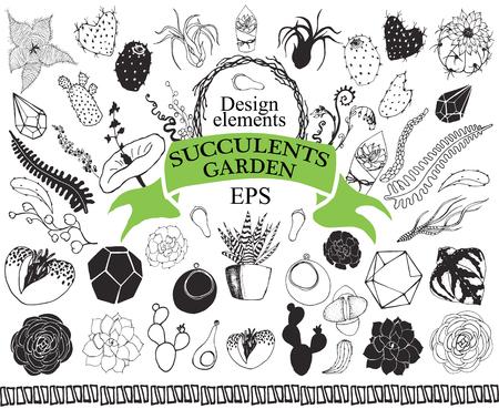 Succulent and cactus doodles garden Hand drawn floral exotic plants set