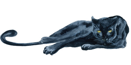 Watercolor black panther Wiledlife hand drawn illustration Imagens
