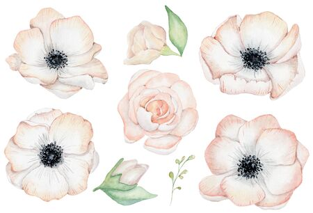Watercolor anemone rose flowers hand drawn illustration isolated on the white background Stockfoto