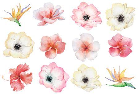 watercolor tropical flowers set. Hand drawn illustration Stockfoto