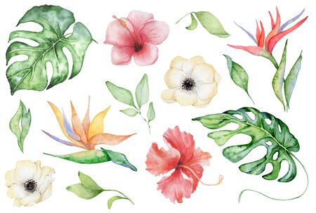 watercolor tropical plants set. Exotic flowers, monstera and palm leaves, botany elements Stockfoto