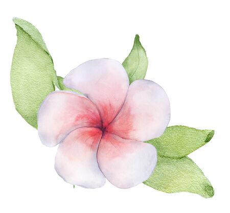 Watercolor tropical flower with green leaves. Hand drawn illustration Stock Photo