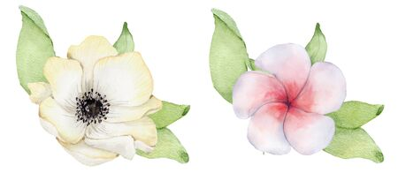 Watercolor white anemone flower with green leaves. Hand drawn illustration Stock Photo