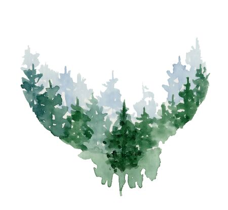 Watercolor pine trees hand drawn illustration isolated on white background 版權商用圖片