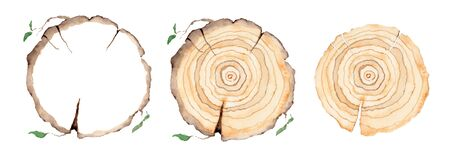 Wood slice set. Tree rings. Watercolor illustration.  Painted texture. Stockfoto