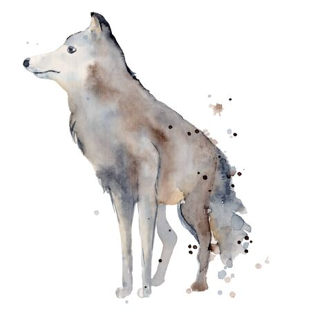 Watercolor wolf hand drawn illustration wild forest animal Foto de archivo - 134607667