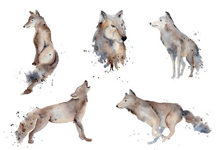 Watercolor wolf hand drawn illustration wild forest animal Foto de archivo - 134607681