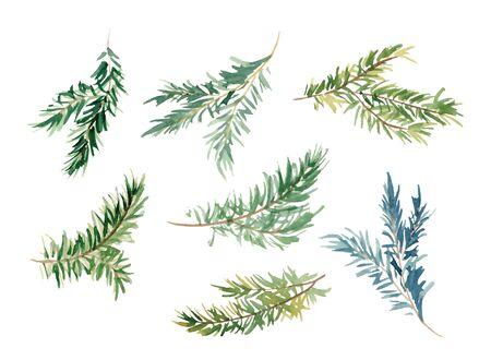 Watercolor fir branches hand drawn illustration set