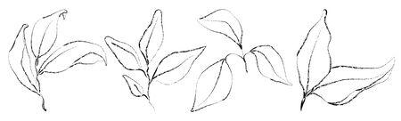 Vector set of hand drawn plants. Botanical sketched floral elements