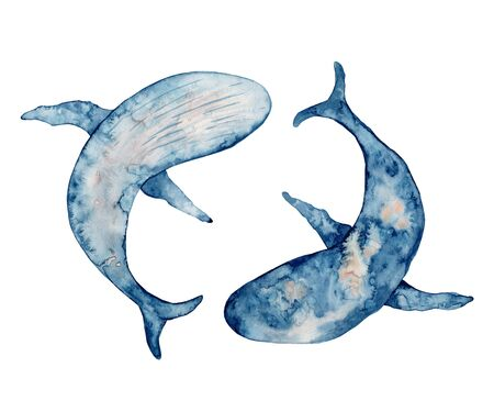 Tow blue whales watercolor illustration. Hand drawn painting, isolated on white background.