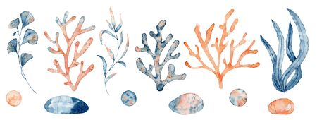 Watercolor set of isolated objects drawing blue and pink algae and corals on white background