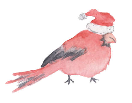 Red cardinal Christmas bird in the Santa hat Watercolor illustration