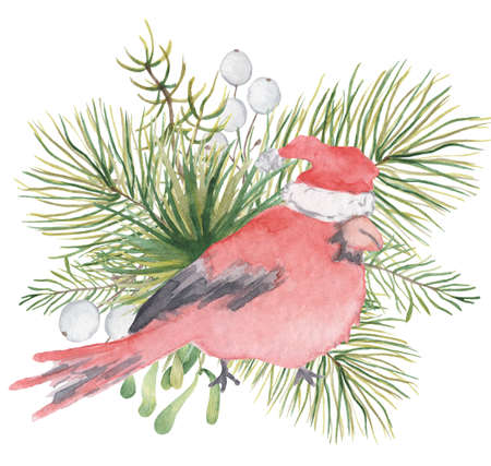 Watercolor Christmas red cardinal bird with pine tree branches Hand drawn illustration 版權商用圖片