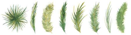 Watercolor pine brunches hand drawn christmas decor illustration 版權商用圖片