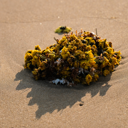 Flower crown on the beach, used by hindus fisherman to pray Gods (Gokarna, Karnataka, India)