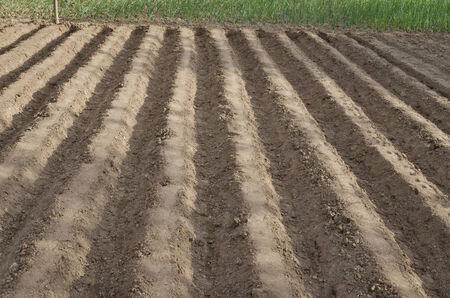 Plowed field in the northern Bulgaria in the summer photo