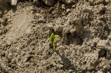 plantlet: Green spring etudes in the northern Bulgaria