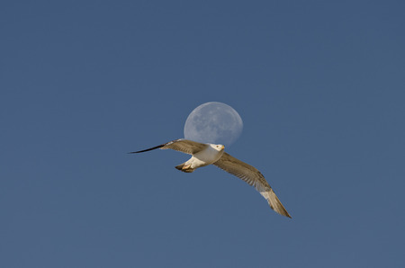 vanishing point: Moon at the end of the day Stock Photo