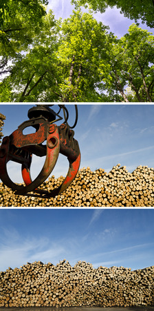 Collage of deforestation and wooden logs