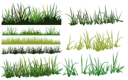 grass vector: collection of grass vector pattern