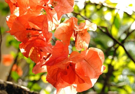 colorfull: Colorfull Leaf
