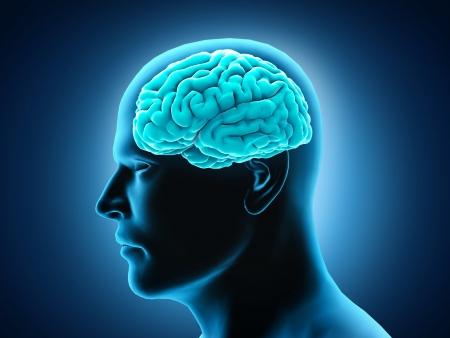 cerebro humano: Anatom�a del cerebro humano Foto de archivo