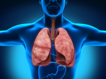 chest disease: Male Anatomy of Human Respiratory System