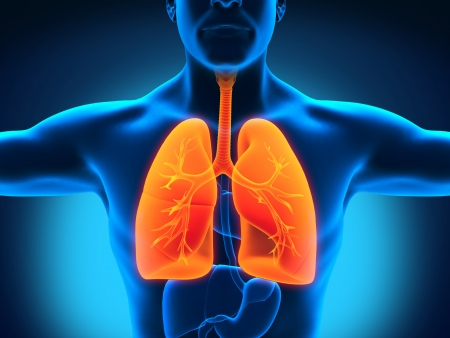 Male Anatomy of Human Respiratory System Stock Photo - 19317154