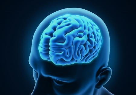 neurons: Human Brain Anatomy